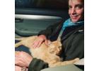 Tigger Georgi sleeps in Joseph Cincotta's lap during the ride home.      Julie Lineberger